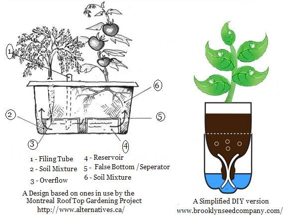 "It has been demonstrated that plants grow better in self-watering containers as opposed to traditional containers. In many cases, under proper care, they will also outperform vegetables grown in a traditional backyard garden. This is due in part to a principal known as ""transpirational pull""."