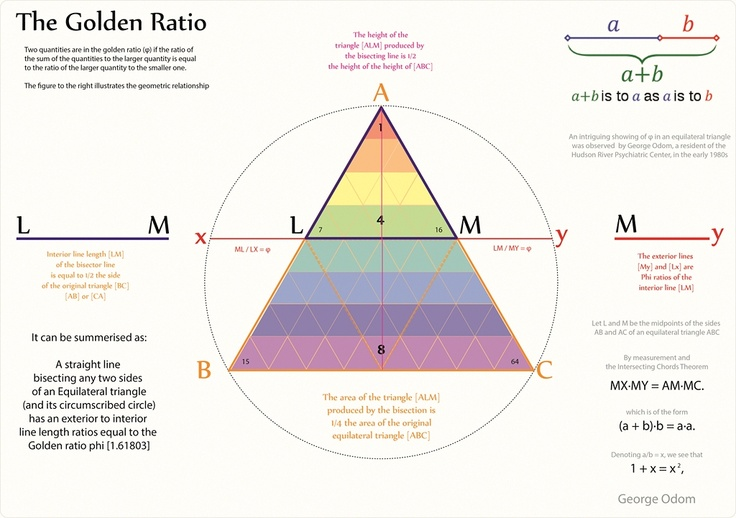 essay on the golden ratio View essay - fibonacci sequence and golden ratio essay from mat 117 at pace hoque fibonacci sequence and golden ratio although many people often forget, math is.