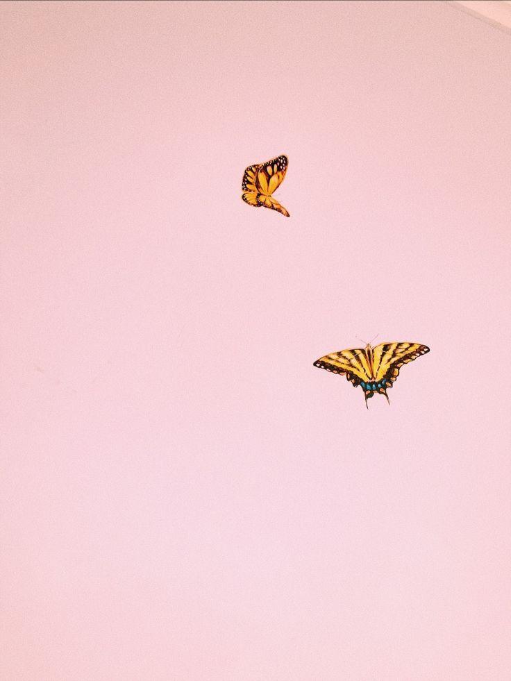 VSCO - #vsco #aesthetic #butterfly   sloaneeeeeeeeee ...