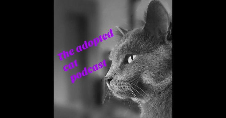 Download past episodes or subscribe to future episodes of The_Adopted_Cat by C Cartmell for free.