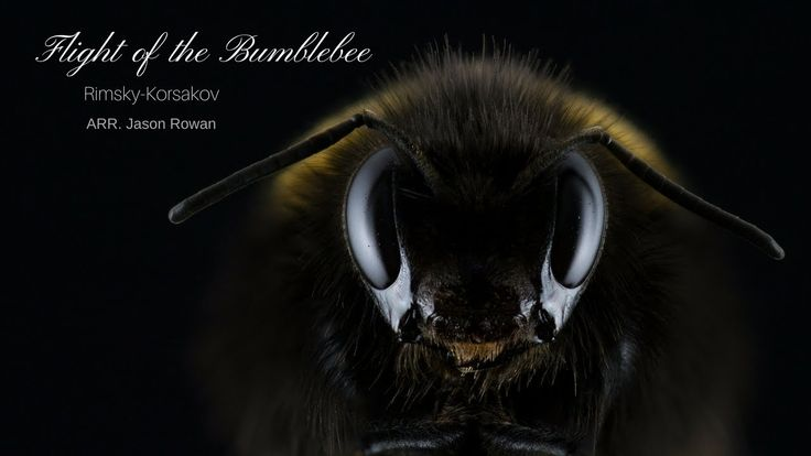 Flight Of The Bumblebee   Remix Jason Rowan  