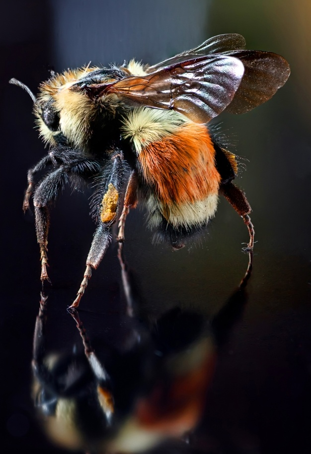 Pčela - Page 2 D97b3ce0c1df187d4ab5b0edf5416b29
