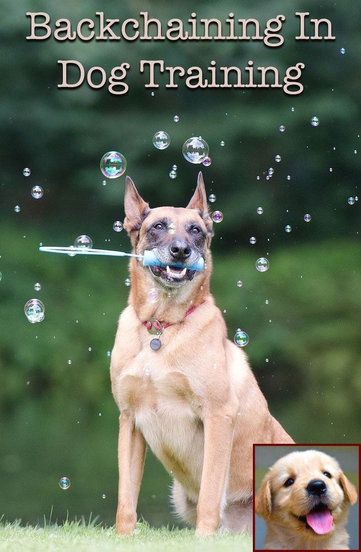 Excessive Barking How To Stop It Dogs Online Dog Training