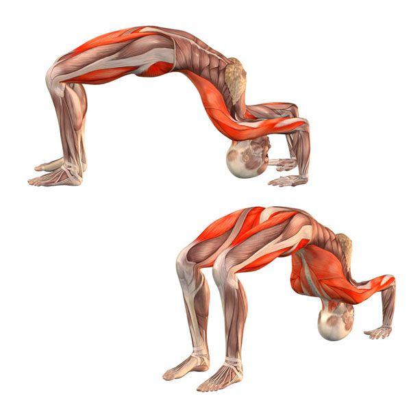 Half-wheel pose - Ardha Chakrasana - Yoga Poses | YOGA.com