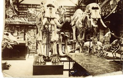 The collections at the University Museum of Zoology, Cambridge date back to 1814 and include an extensive collection of scientifically important zoological material designated as being of outstanding national and international significance by the Museums, Libraries and Archives Council.