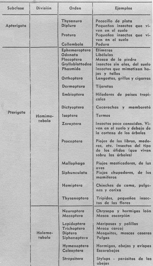 Clasificacion de los Insectos Características Generales