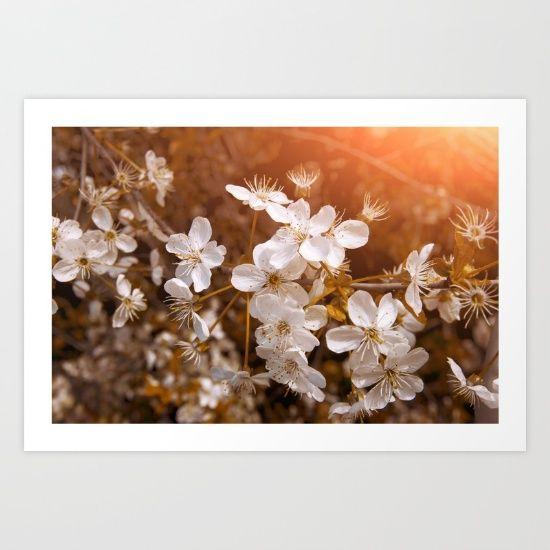 Blossoming Garden #springtime #blossoming #spring_garden