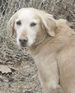 Special Needs Dogs For Adoption In Ontario
