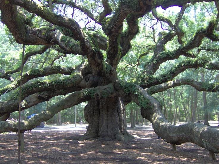 Angel Oak - Amazing!