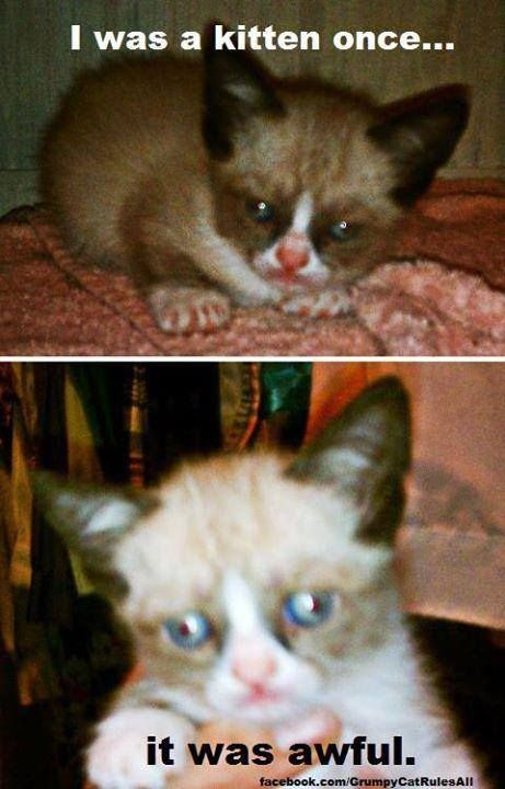 awwww grumpy cat baby pictures!