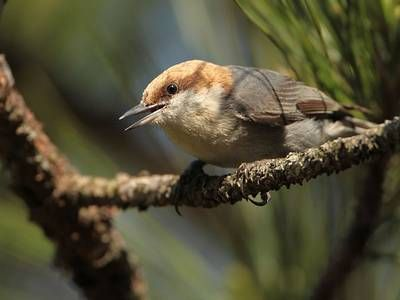 Study shows sustainable forestry sustains these 5 birds