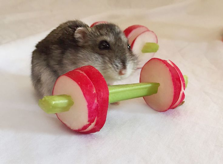 We Made A Tiny Vegetable Gym For Hamsters Who Hate Exercise