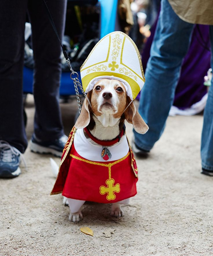 The 35+ Best Dog Costumes EVER
