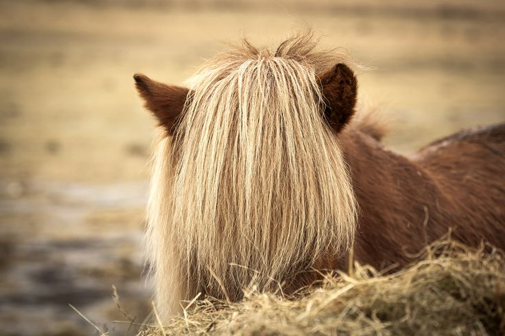 hairstyle by Eugen Chirita on 500px
