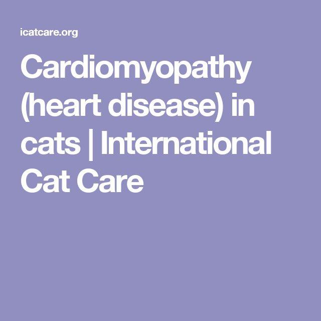 Cardiomyopathy (heart disease) in cats | International Cat Care