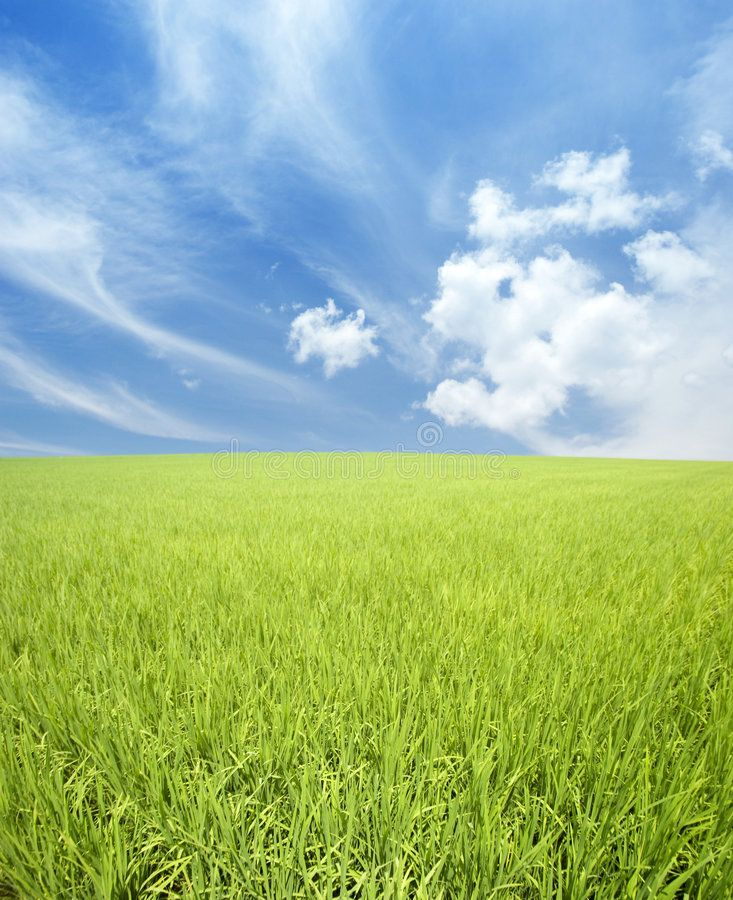 Green Field Sky And Clouds Landscape Of Green Rice Field Clouds And Blue Sky Ad Sky Clouds Landscape Scenery Beautiful Landscapes Landscape Materials