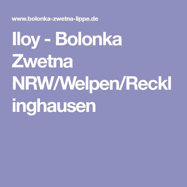 Iloy - Bolonka Zwetna NRW/Welpen/Recklinghausen