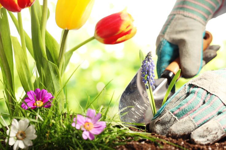 Curarsi con piante e fiori: ortoterapia per combattere lo stress http://www.sapere.it/sapere/pillole-di-sapere/salute-e-benessere/ortoterapia-cura-stress-piante-fiori-horticultural-teraphy.html