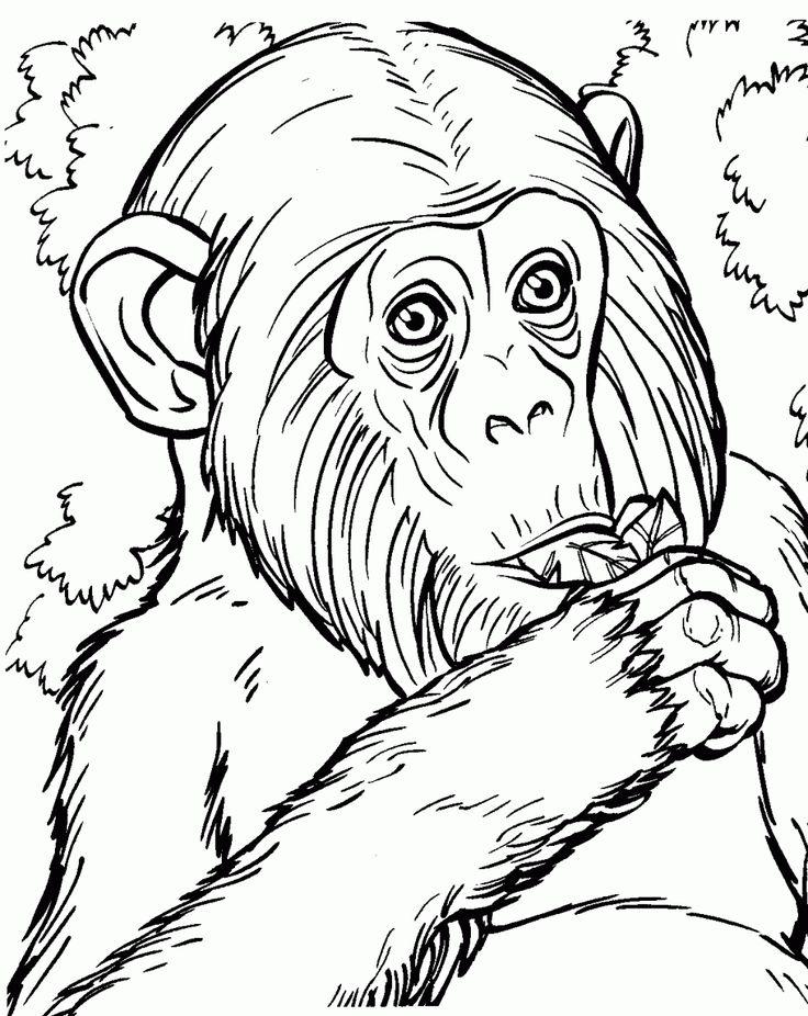 Kolorowanka szympans