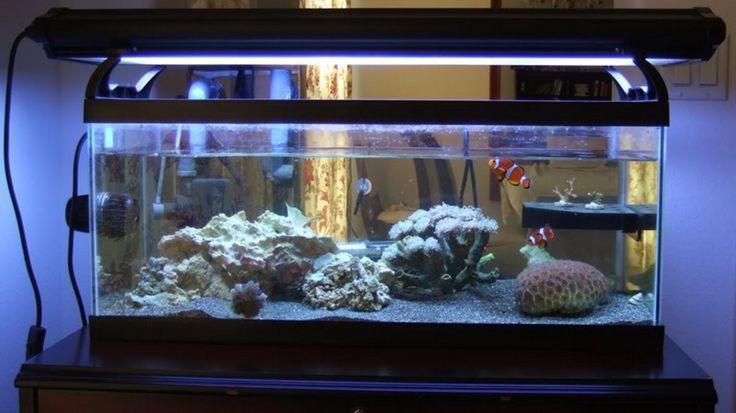 20 gallon long aquarium picture