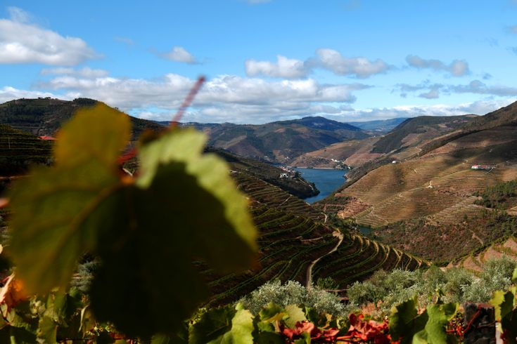 Located between the slopes of the mountains surrounding the Douro River, the wine-producing quintas, carefully selected by A2Z, will provide you experiences associated with wine culture, gastronomy and local people's knowledge and culture.