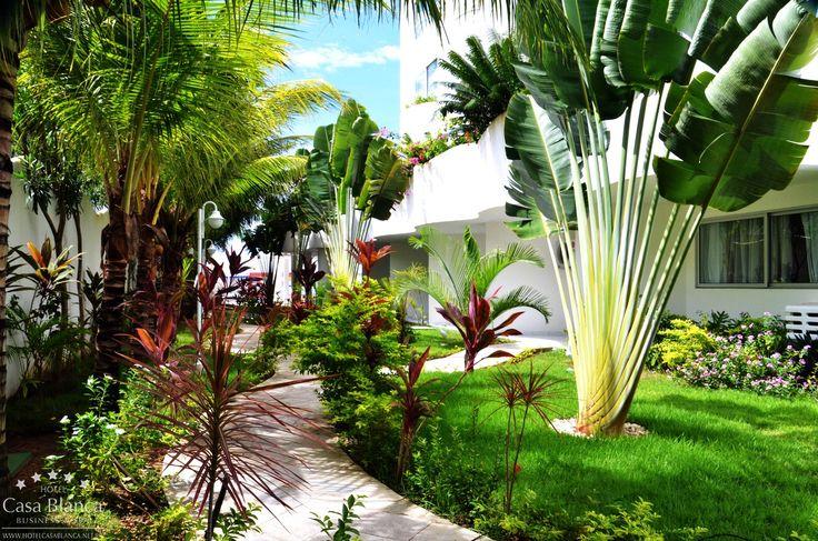 O jardim do Hotel Casa Blanca com diversas plantas ...
