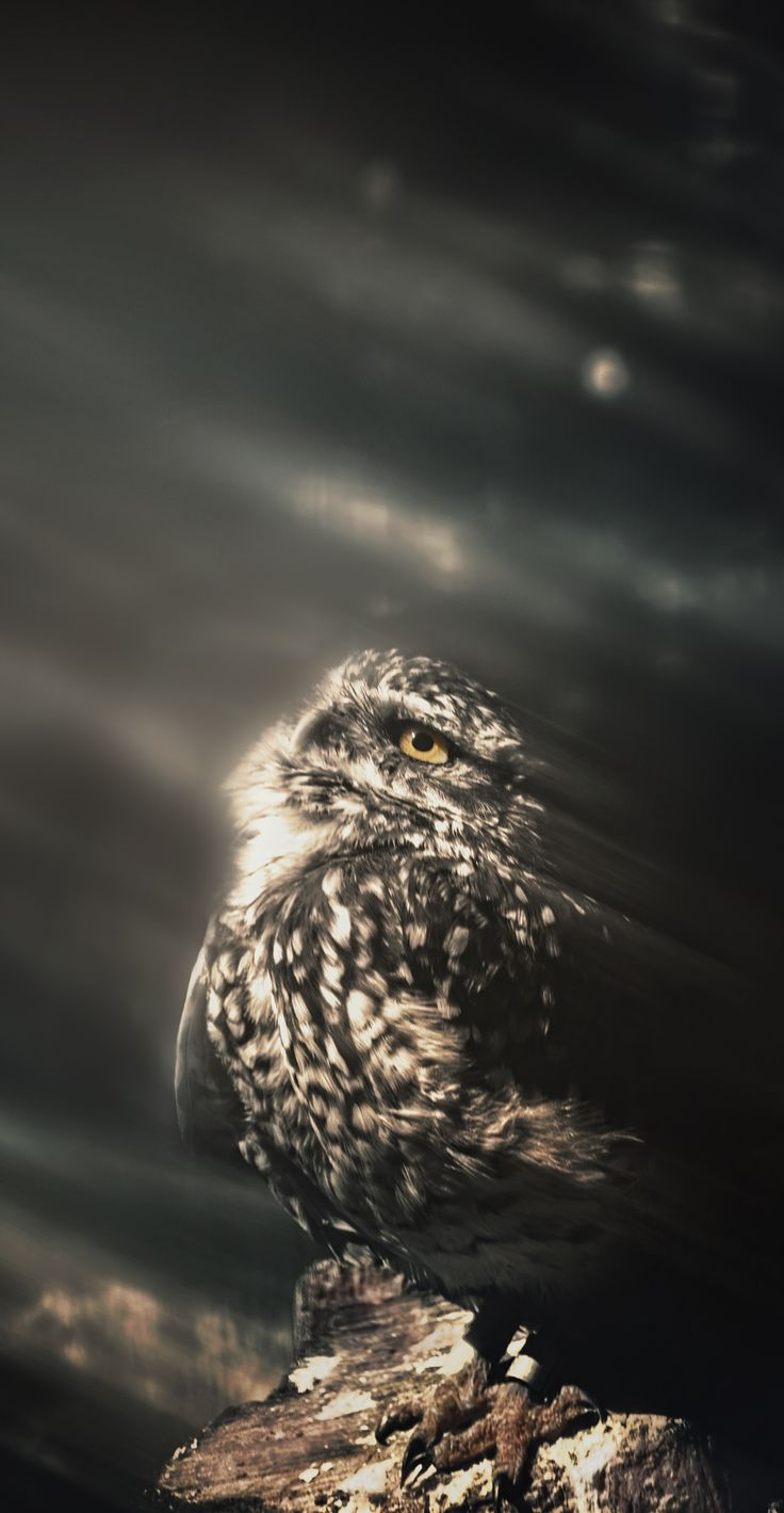 A little owl staring the sky