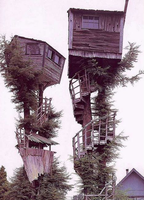 The provenance of this incredible treehouse photo is unknown, but it's certainly captivating. Two tiny cabins teeter atop fir trees, accessible via spiraling staircases.
