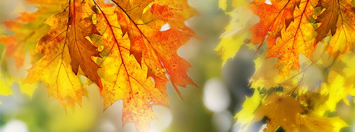 #Organic Sugar, #Oils, #Natural #Waxes & #Butters!  Top 5 Awesome Autumn Beauty Tips