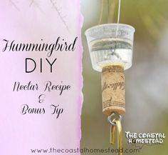 DIY Hummingbird Nectar recipe and bonus tip.
