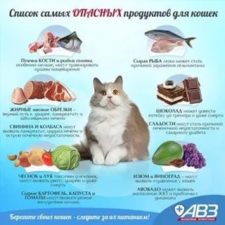 что можно есть кошкам а что нельзя: 24 тыс изображений найдено в Яндекс.Картинках