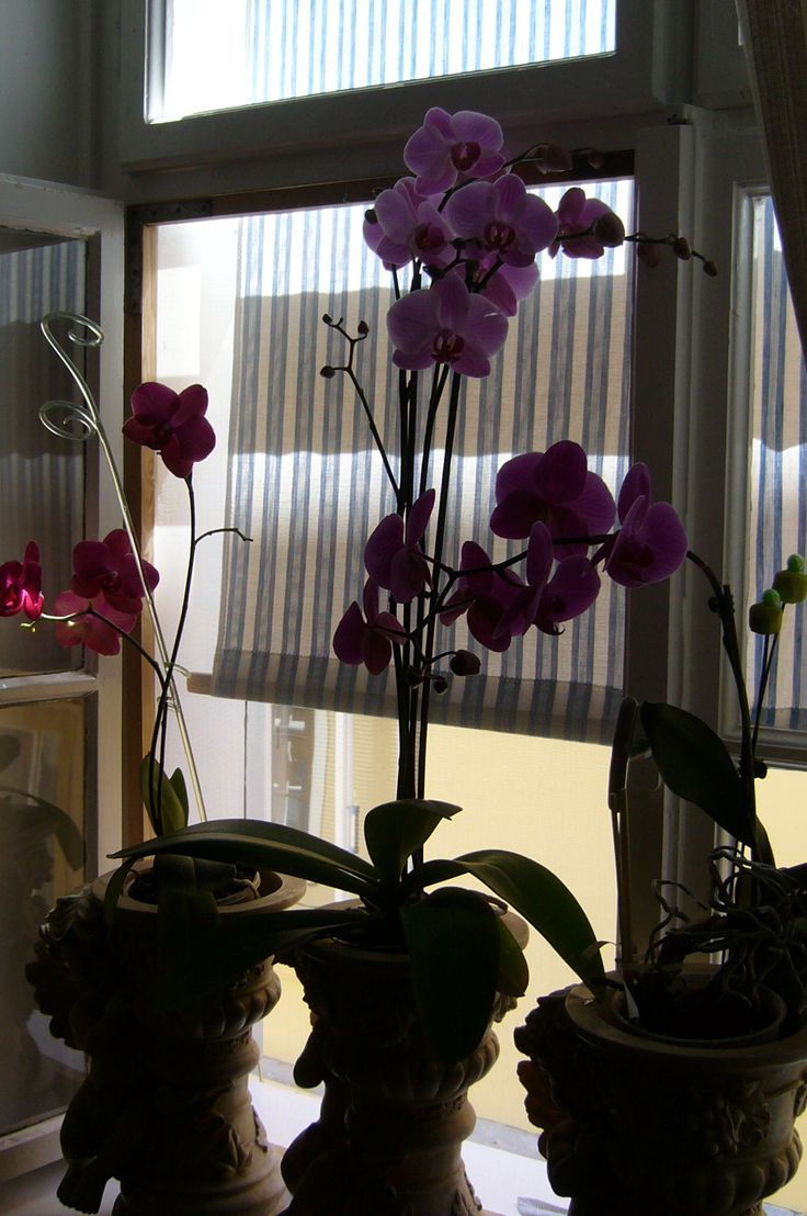 orchids in the shade