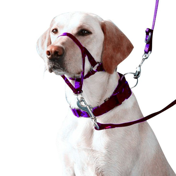 Eastop Dog Head Halter Small Dog Head Halter Large Dog Head Collar Pet Training Dog Head Collar Blue Dog Head Halter No Pull Dog Head Halter Gentle Leader * Review more details here : Dog Training and Behavior Aids