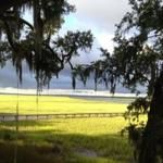 Harris Neck National Wildlife Refuge (Savannah, GA): Attraction Reviews - TripAdvisor