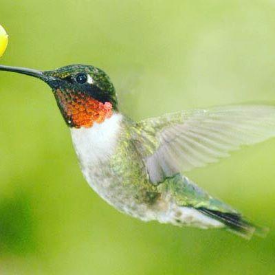 Calling all bird watchers! Wildlife is abundant here!