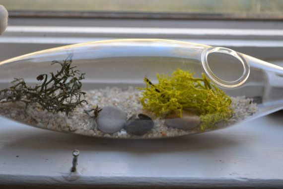 Terrarium kit by littleglasshouses on Etsy, $20.00