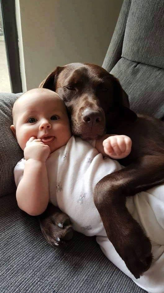 sooo cute ))) dog and baby #dog #pet #dogs #pets #cute #baby #sunshinepet #puppy #puppies #love #life