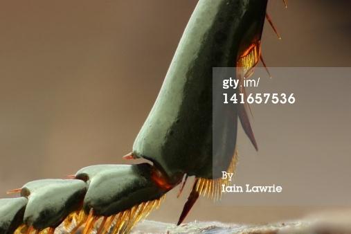 leg of ground beetle