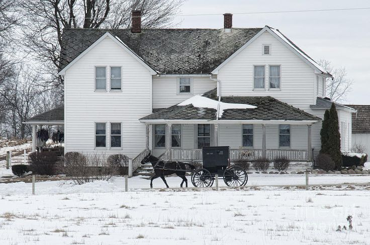 Amish Buggy And Amish House Photograph  - Amish Buggy And Amish House Fine Art Print