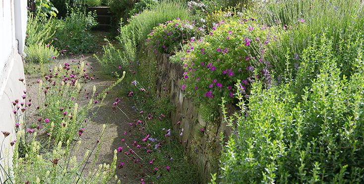 49 besten naturgarten wildlife garden bilder auf pinterest naturgarten giersch und pflanzen - Vertikale wandbepflanzung ...