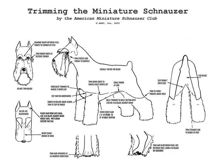 trimming chart American Miniature Schauzer Club