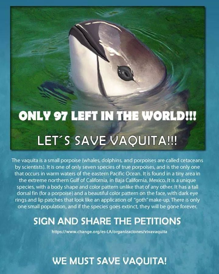 Only 97 Left In The World.  Let's save them!