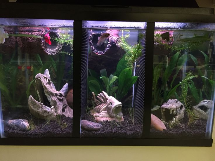 Best 25 betta tank ideas on pinterest betta fish tank for 2 gallon betta fish tank