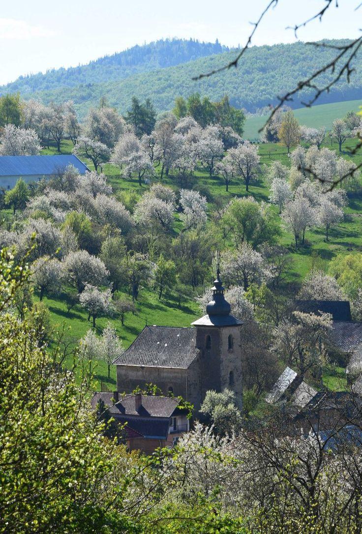 Krása kvitnúcich čerešní - malebná krajina pri Brdárke