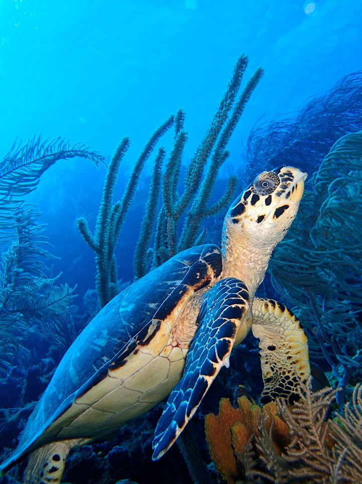 A Sea Turtle Pauses to Look Around Photo and caption by Erik Rye  @Smithsonian Magazine