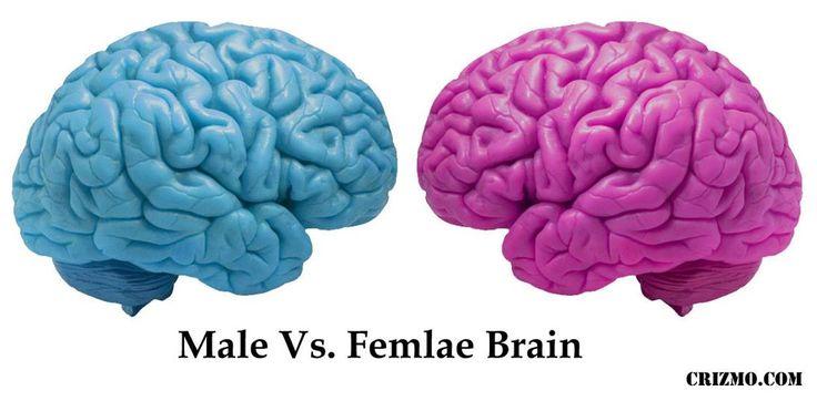 """مطالب مرتبط: """"کوری احساسی"""" چیست؟! سازگاری با شرایط ناپایدار با """"کاهش تولید سلولهای مغزی"""" استرس در کودکان، تغییرات ساختمانی منفی در مغز آنان ایجاد می کند تفاوت در جریان خون مغزی زنان و مردان """"از دوران بلوغ شروع میشود"""" افسردگی شدید منجر به """"تغییرات ژنتیکی"""" می شود به دنیا آوردن بچه باعث افزایش ماده خاکستری …"""