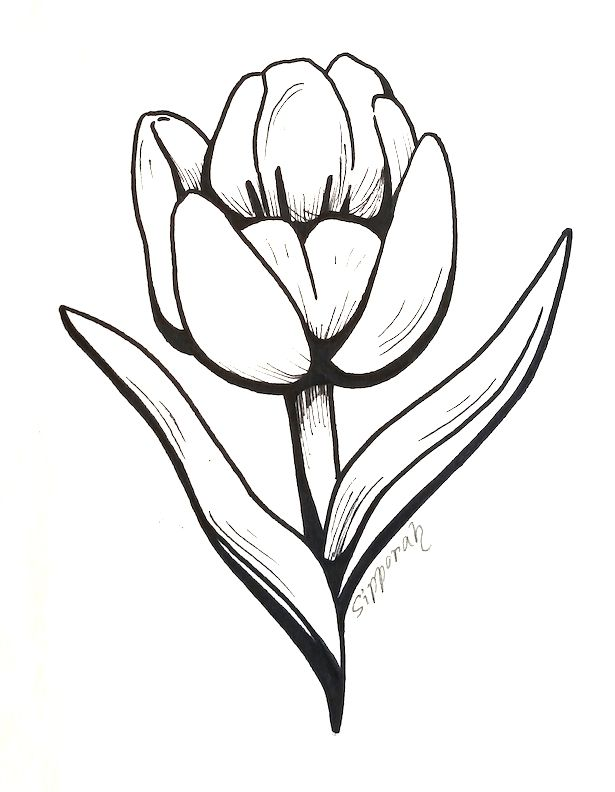 Tulip Marker Drawing Ii Flower Drawing Flower Sketches Trendy Flowers