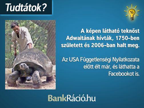 A képen látható teknőst Adwaitának hívták, 1750-ben született és 2006-ban halt meg. Az USA Függetlenségi Nyilatkozata előtt élt már, és láthatta a Facebookot is. Forrás: http://en.wikipedia.org/wiki/Adwaita