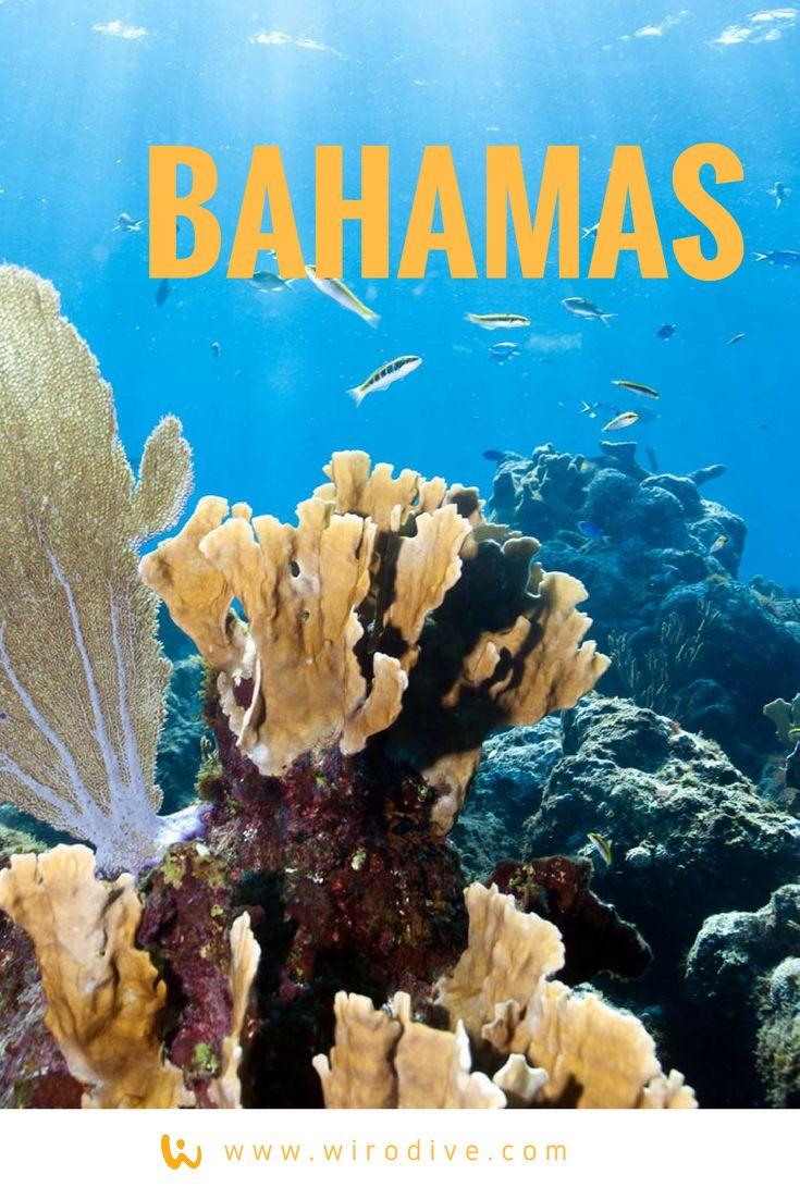 An was denkt ihr, wenn ihr Bahamas hört? Paradies? Schwimmende Schweine? Korallen? Tiger Beach? #wirodive #tauchreisen #erlebnisreisen #scubakids #born2dive #oceanlovers #touchedbynature #bahamas #paradies #schwimmendeschweine #schweine #tigerbeach #sommer #sonne #urlaub #reisen #erlebnis #abenteuer