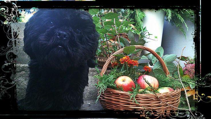 my little black helper...